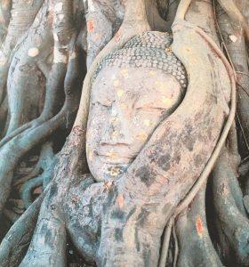 Baum-Buddha